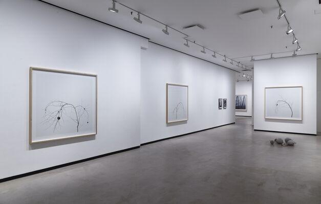 Axel Antas, installation view
