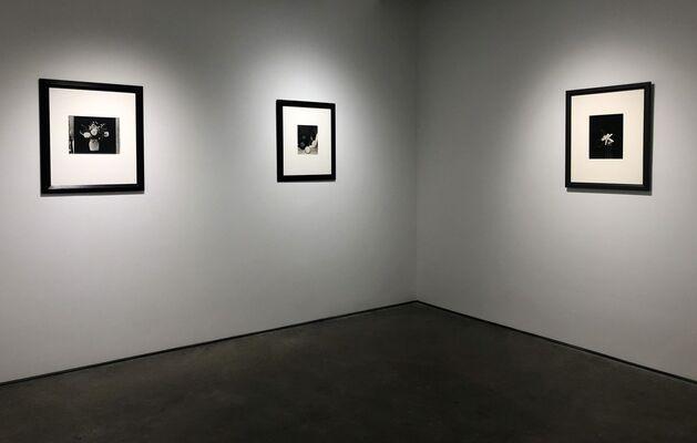 Brancusi's Flowers, installation view