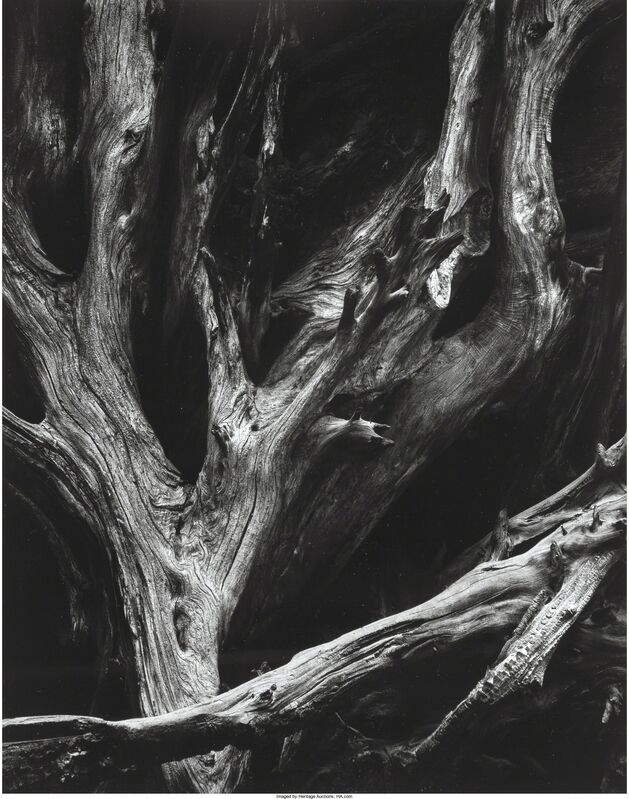 Ansel Adams, 'Sequoia Roots, Yosemite National Park, California', 1950, Photography, Gelatin silver, printed later, Heritage Auctions