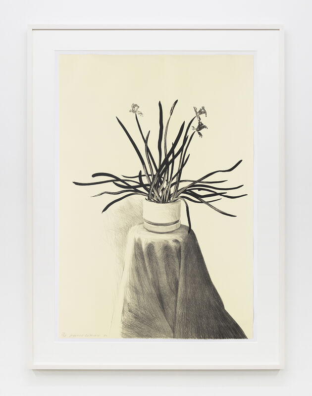 David Hockney, 'Potted Daffodils', 1980, Print, Lithograph, Mary Ryan Gallery, Inc