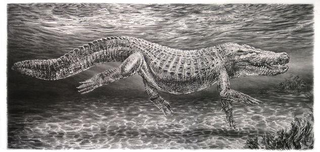Rick Shaefer, 'Alligator', 2015