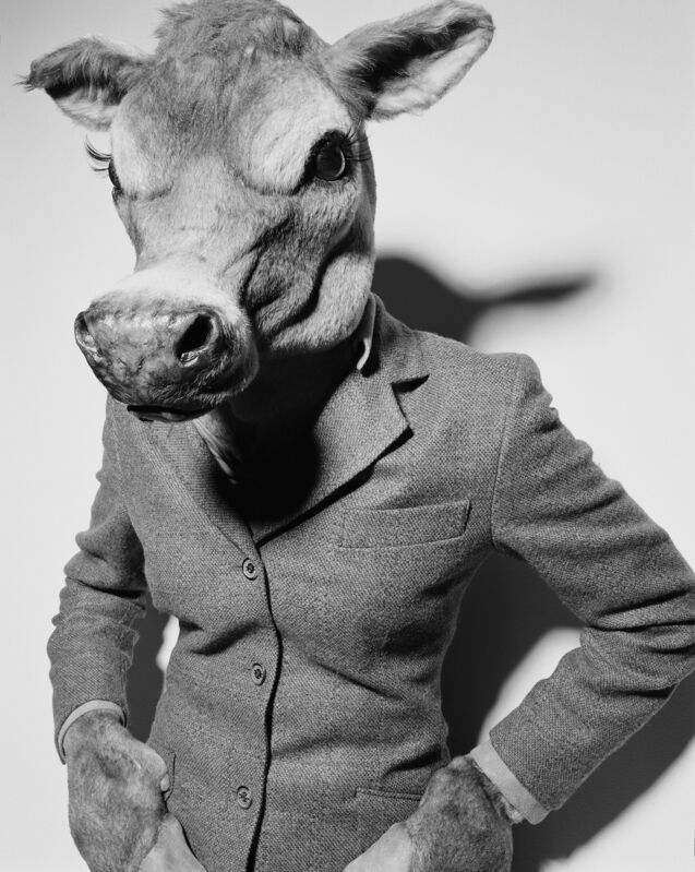 Rankin, 'Suited Cow', 2001, Photography, Archival Black & White Lambda Print,  29 ARTS IN PROGRESS gallery