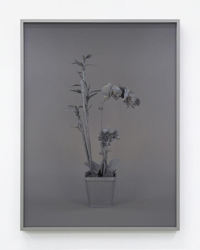 Stephanie Syjuco, 'Neutral Orchids (Phalaenopis + Dracaena sanderana 2)', 2016, Print, Pigment inkjet, Contemporary Art Museum St. Louis Benefit Auction