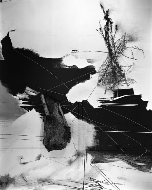 Lauren Semivan, 'September Birch', 2014, Photography, Archival ink print, Benrubi Gallery