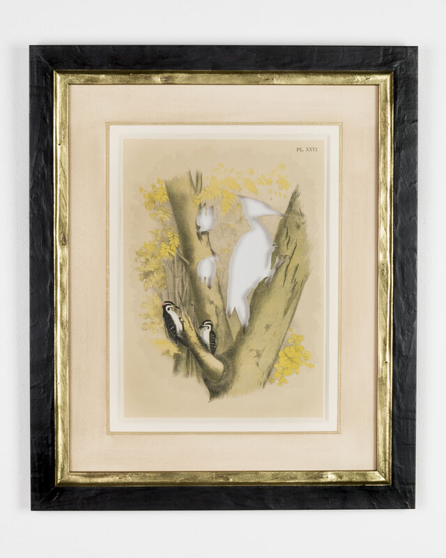 Brandon Ballengée, 'RIP Ivory-Billed Woodpecker: After Theodore Jasper', 1881/2015, Print, Artist cut and burnt chromolithograph, etched glass funerary urn and ashes, Goya Contemporary/Goya-Girl Press