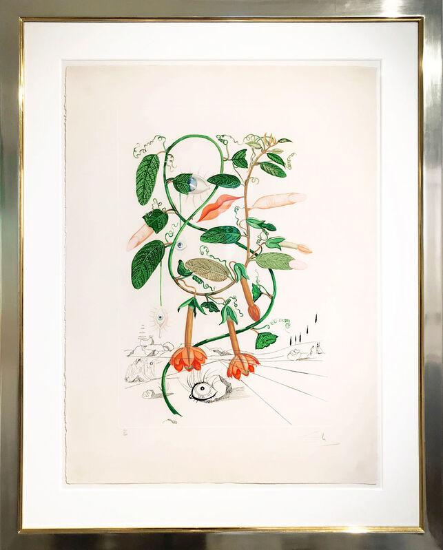 Salvador Dalí, 'Cobea (Pisum sensuale)', 1968, Print, Etching on Arches paper, Galerie Kellermann