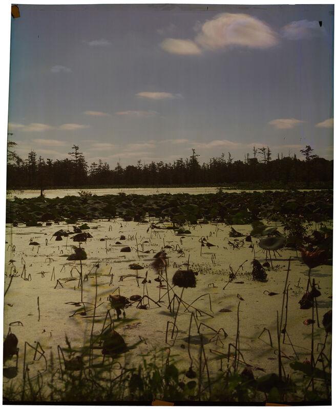 John Chiara, 'County Line at Annis Brake, Variation 2', 2013, Photography, Direct positive print on Ilfochrome paper, Jackson Fine Art