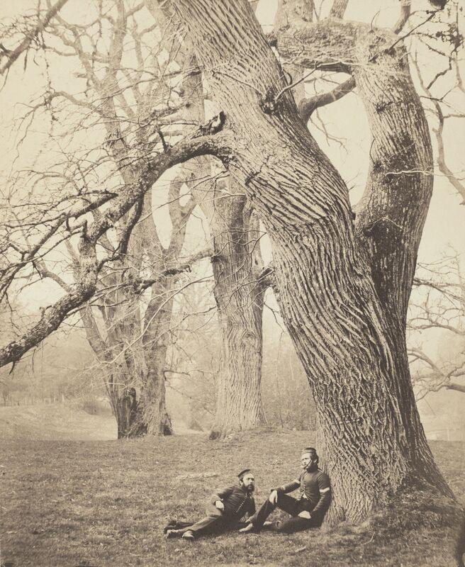 Charles Thurston Thompson, 'Spanish Chestnut Trees in Albury Park, Surrey', 1857-1858, Photography, Albumen print, San Francisco Museum of Modern Art (SFMOMA)