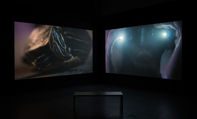 Christopher Richmond: Double Fantasy, installation view