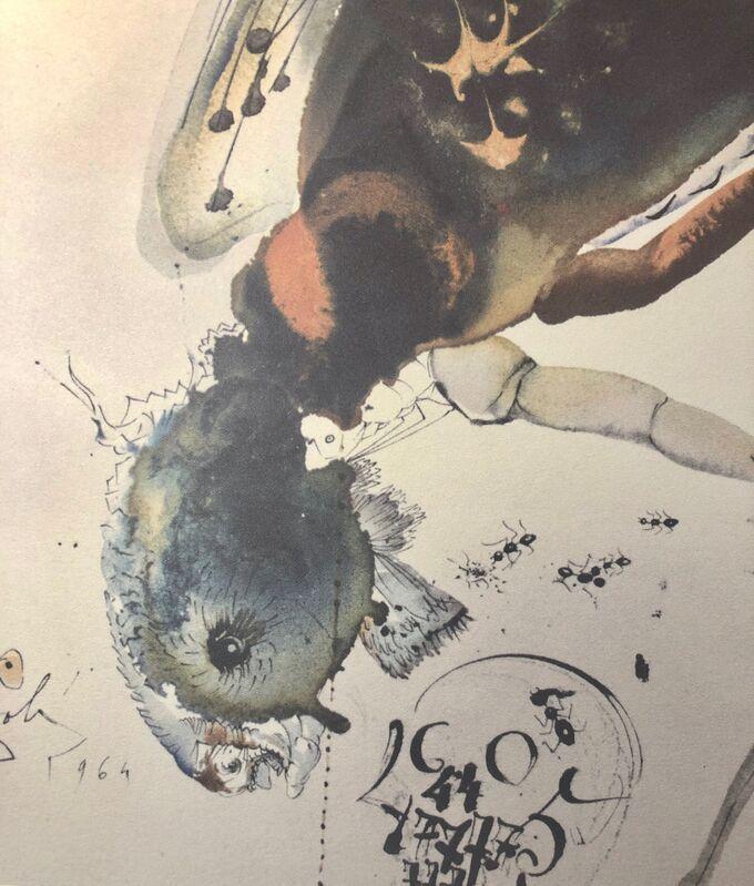 Salvador Dalí, 'Locust and Grasshopper, 'Locusta Et Brucus', Biblia Sacra', 1967, Print, Original Lithograph, Inviere Gallery