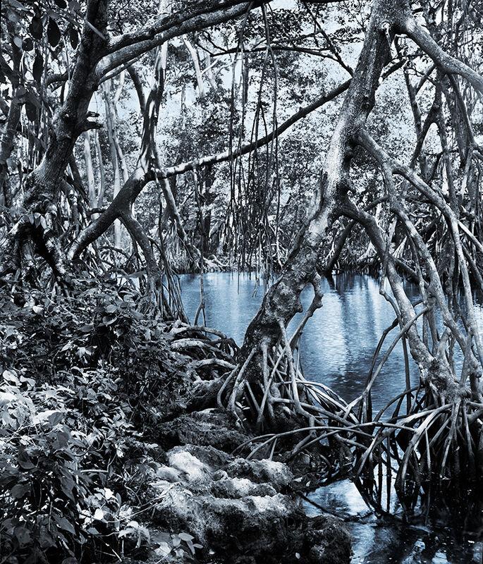 Holly King, 'Vaulted Paradise', 2009, Photography, Chromogenic print, Art Mûr