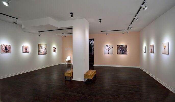 Pussylluminati, installation view