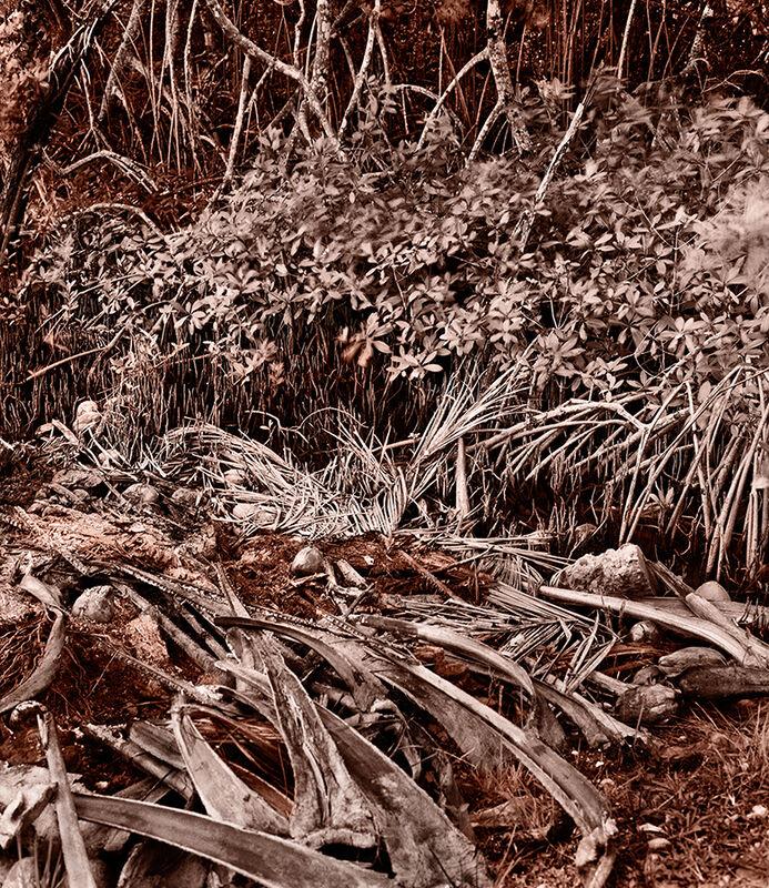 Holly King, 'Remains', 2009, Photography, Chromogenic print, Art Mûr