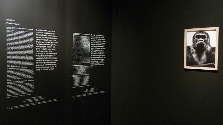 In Human by Paweł Bogumił, installation view