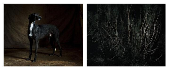 Martin Usborne, 'Forest & Galgo', 2015