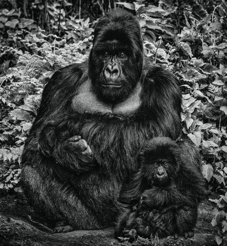 David Yarrow, 'Like Father Like Son', 2020, Photography, Archival Pigment Print, Hilton Asmus