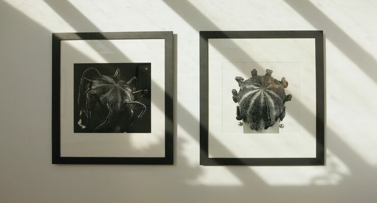 African Portraits, installation view
