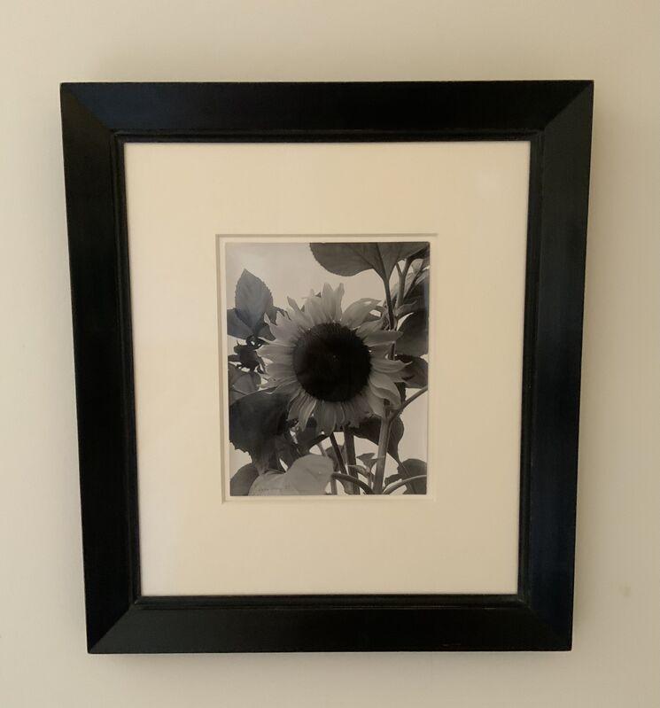 Man Ray, 'Sunflower', 1930, Photography, Vintage silver gelatin print, Grob Gallery