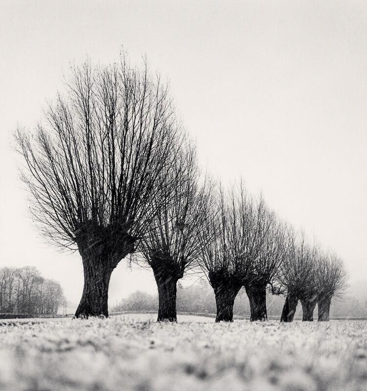 Michael Kenna, 'Seven Pollarded Trees - Capaize, Bourgogne, France. ', 1998, Photography, Sepia toned silver gelatin print, Galeria de Babel