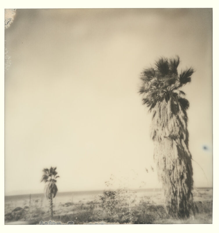 Stefanie Schneider, 'Bombay Palm Trees (Bombay Beach)', 2019, Photography, Digital C-Print, based on a Polaroid, Instantdreams