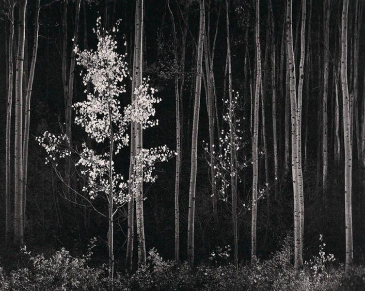Ansel Adams, 'Aspens, New Mexico (Horizontal)', 1958