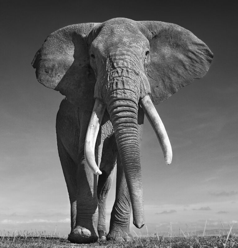 David Yarrow, 'The Don ', 2017, Photography, Archival pigment print, A. Galerie