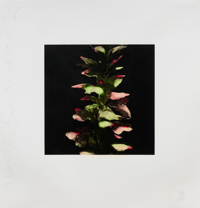 Donald Sultan, 'Acanthus (from Fruits & Flowers III), 1992-1994', Print, Screenprint on hand made paper, Hindman