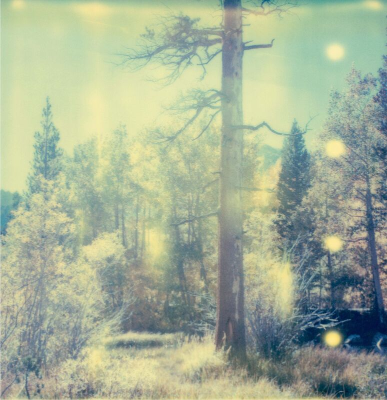 Stefanie Schneider, 'In the Range of Light (Wastelands) ', 2003, Photography, 6 Analog C-Prints, hand-printed by the artist on Fuji Crystal Archive Paper, based on 6 SX-70 Polaroids. Not mounted., Instantdreams