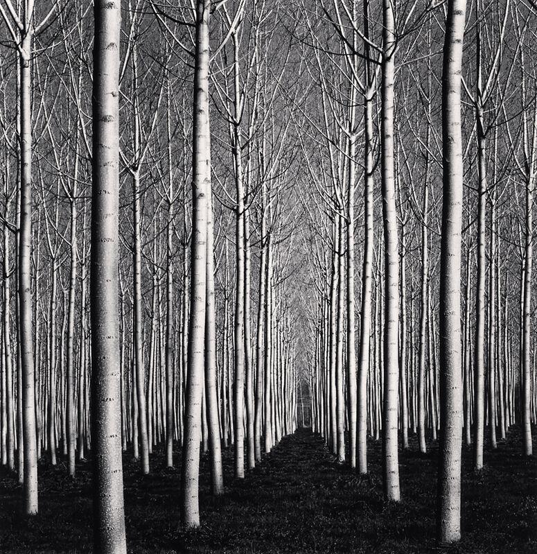 Michael Kenna, 'Spring Poplar Trees, Pavia, Italy', 2019, Photography, Toned silver print, Robert Mann Gallery