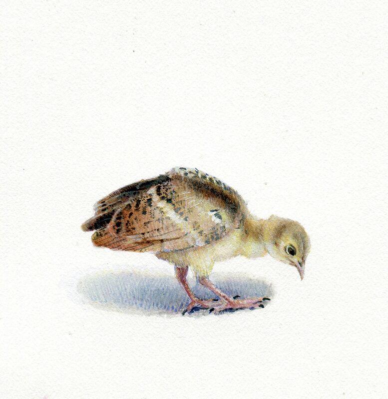 Dina Brodsky, 'Peacock Chick', 2018, Painting, Gouache on paper, Garvey | Simon
