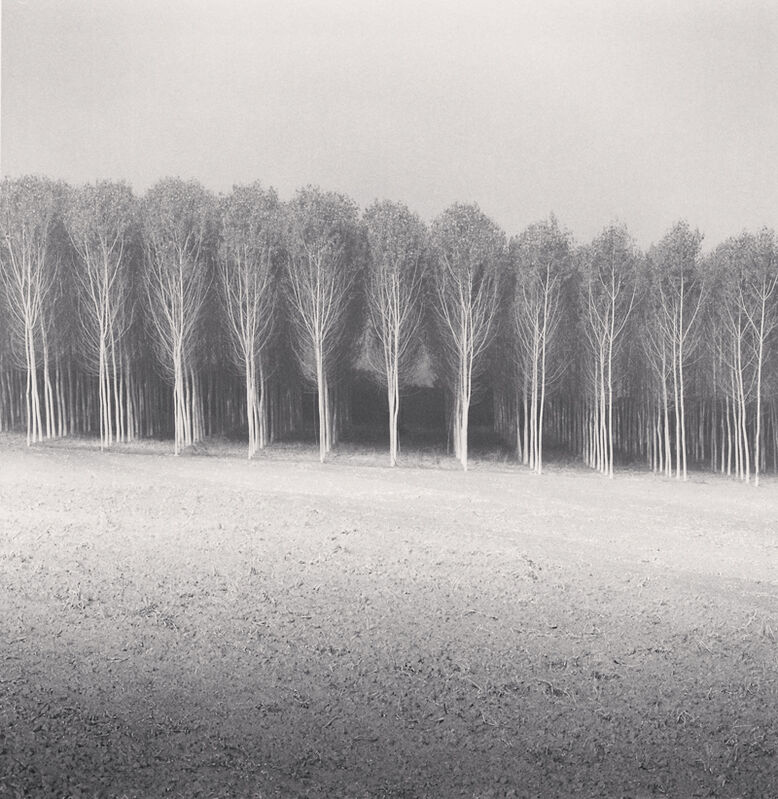 Michael Kenna, ' Forest of Poplars, Caposotto, Sermide, Mantova, Italy', 2018, Photography, Toned silver print, Robert Mann Gallery