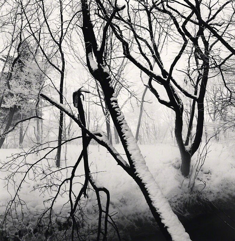 Michael Kenna, 'Kawayu Forest, Study 1, Hokkaido, Japan', 2014, Photography, Toned gelatin silver print, G. Gibson Gallery