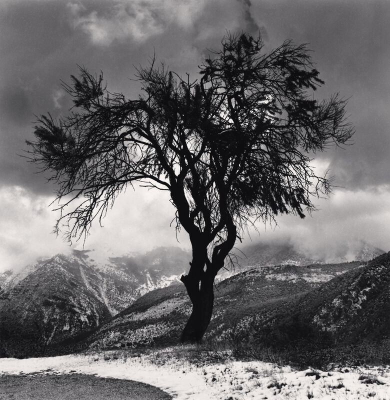 Michael Kenna, 'Almond Tree and Mountains, Cansano, Abruzzo, Italy', 2016, Photography, Toned silver print, Robert Mann Gallery