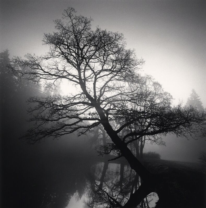 Michael Kenna, 'Leaning Tree - Pruhonice, Czechoslovakia. ', 1992, Photography, Sepia toned silver gelatin print, Galeria de Babel