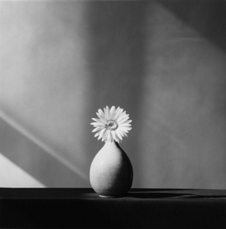 Robert Mapplethorpe, 'African Daisy', 1982, Photography, Silver gelatin print, Mai 36 Galerie