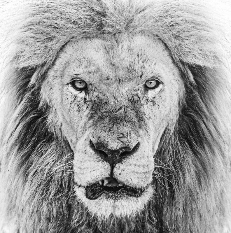 David Yarrow, 'Ghost Story', 2020, Photography, Museum Glass, Passe-Partout & Black wooden frame, Leonhard's Gallery