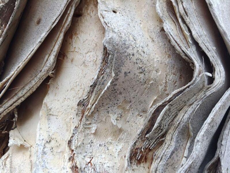 Michael Haggiag, 'Peper Trees series right', 2015