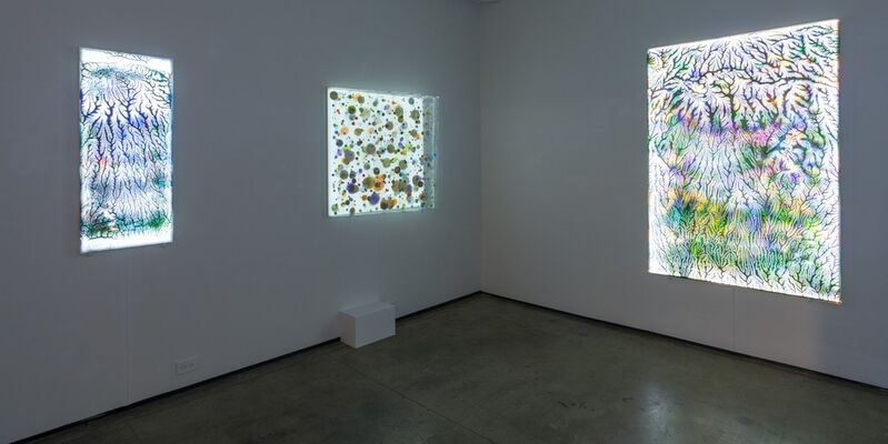 PSYCHEDELIC, installation view