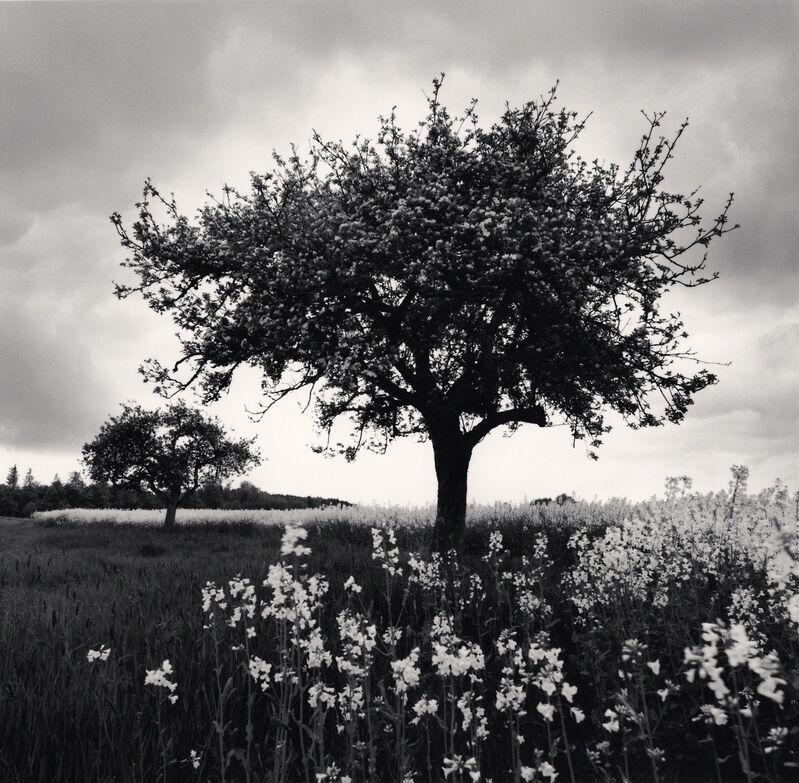 Michael Kenna, 'Spring Trees - Westerwald, Germany.', 2010, Photography, Sepia toned silver gelatin print, Galeria de Babel