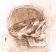 Headbones Gallery
