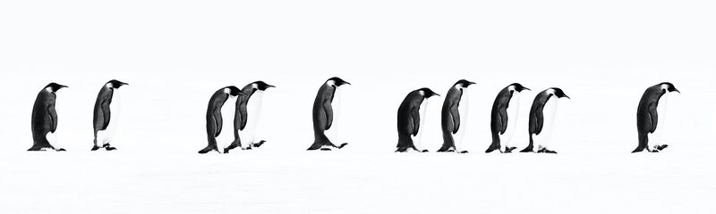 David Yarrow, 'The Long March', 2010, Photography, Digital Pigment Print on Archival 315gsm Hahnemuhle Photo Rag Baryta Paper, Samuel Owen Gallery