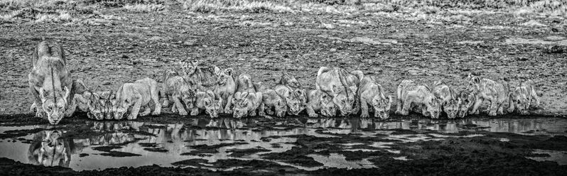 David Yarrow, 'One for the Road', 2020, Photography, Archival Pigment Print, Hilton Asmus