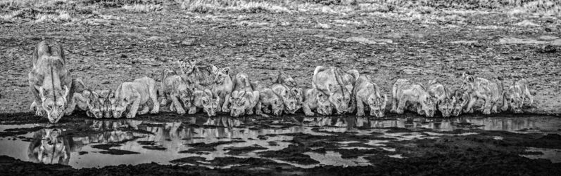 David Yarrow, 'One for the Road', 2020, Photography, Archival Pigment Print, Samuel Lynne Galleries