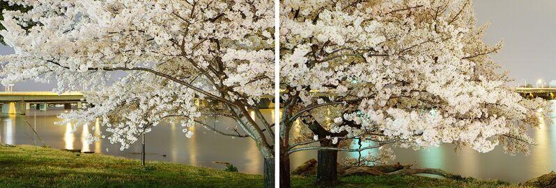 Frank Hallam Day, 'Cherry Blossom Diptych', 2012, Photography, Archival pigment print, Addison/Ripley Fine Art