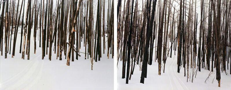 Laura McPhee, 'Untitled (Sawtooth Valley, Idaho) (#94104-94089)', 2008, Photography, Digital chromogenic print, Benrubi Gallery