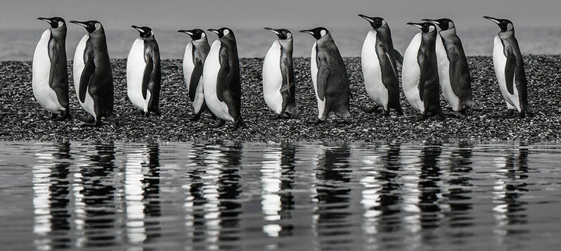 David Yarrow, 'Ocean's eleven', 2018, Photography, Archival pigment print, A. Galerie