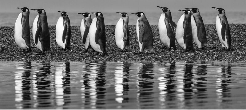 David Yarrow, 'Ocean's Eleven', 2018, Photography, Museum Glass, Passe-Partout & Black wooden frame, Leonhard's Gallery