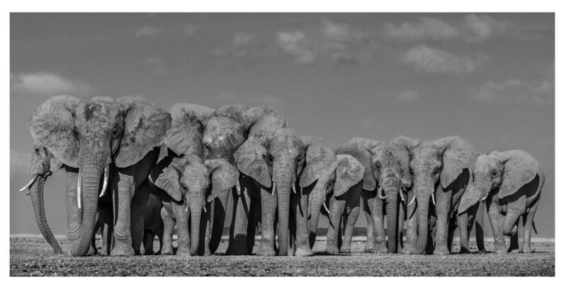 David Yarrow, 'Defense', 2019, Photography, Archival pigment print, A. Galerie