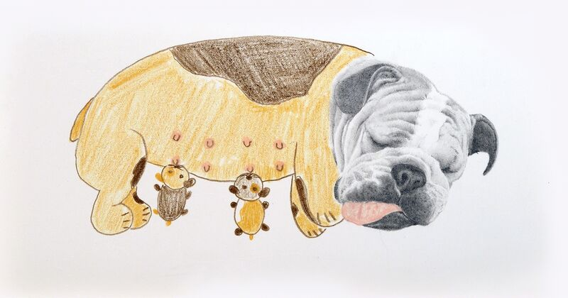Andres Layos, 'Fiona y sus cachorros', 2018, Drawing, Collage or other Work on Paper, Pencils on paper, Galerie C.O.A