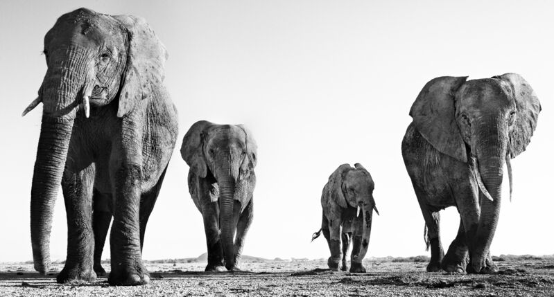 David Yarrow, 'Boy Band', 2014, Photography, Archival pigment print, A. Galerie